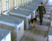 Lackland Air Force Base – Military Working Dog Kennels Design/Build